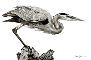 Daniel Adams Blue Heron