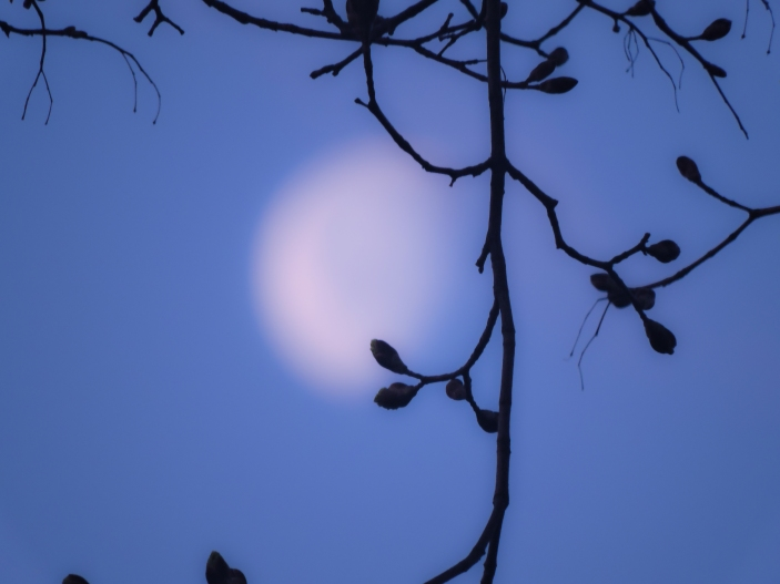 pair up w poem by Kosei about moon