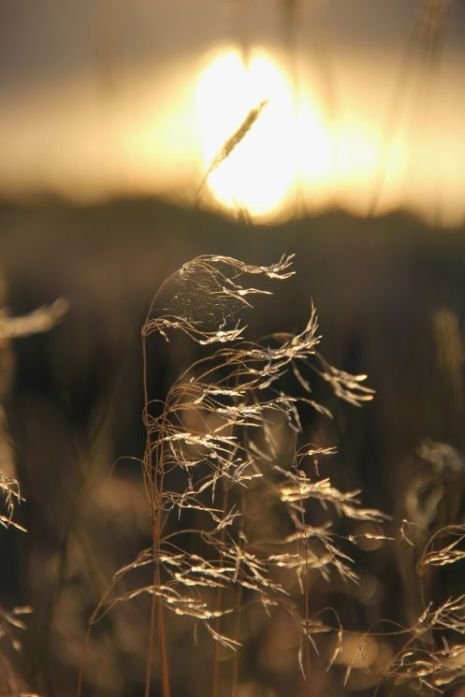 Sun Grass_Rehfeldt pair with hillsong poem