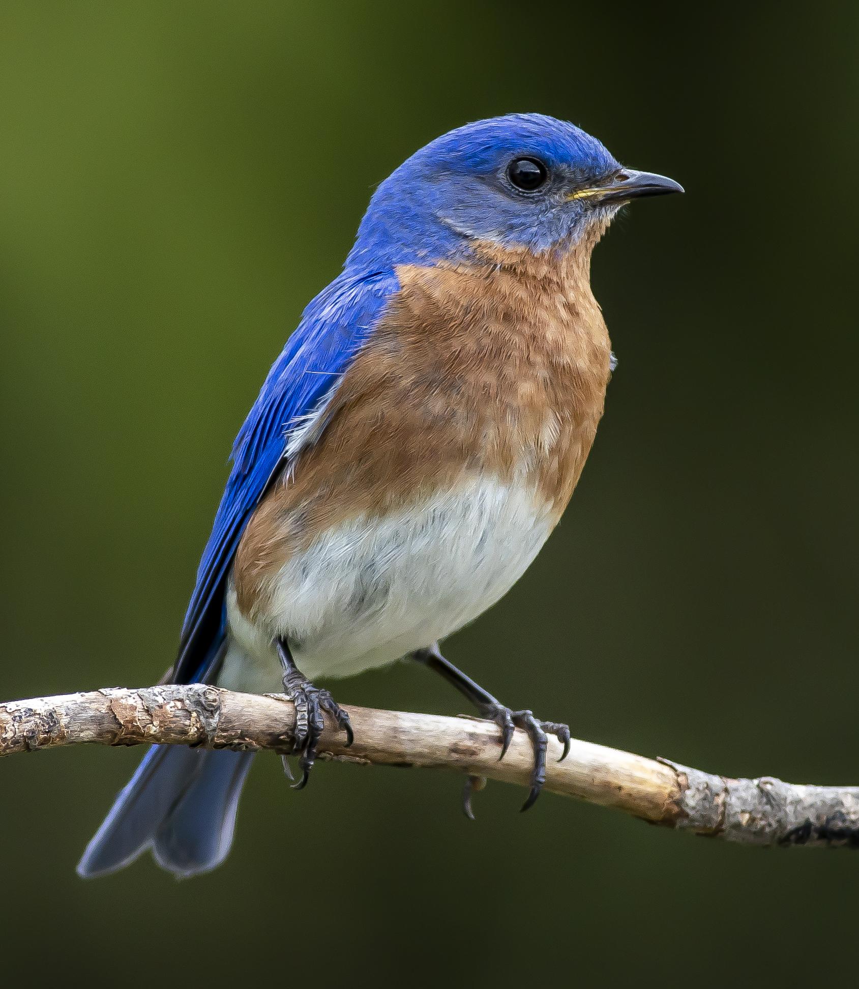 BlueBird5-5-20
