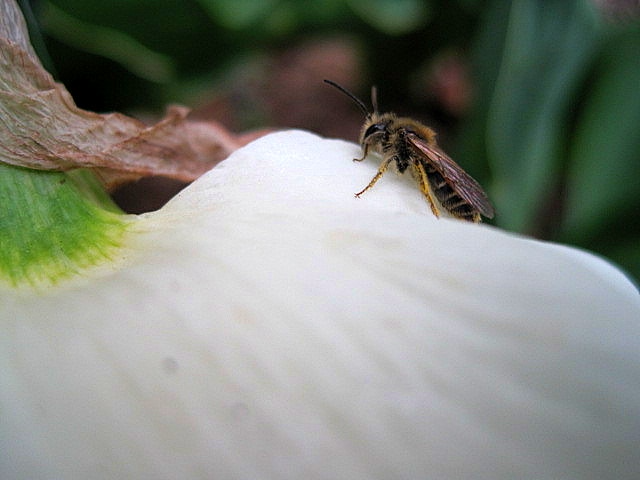 Bee the Hope image file